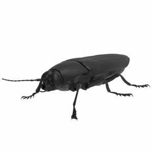 مدل سه بعدی سوسک سیاه