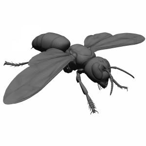 مدل سه بعدی زنبور زرد
