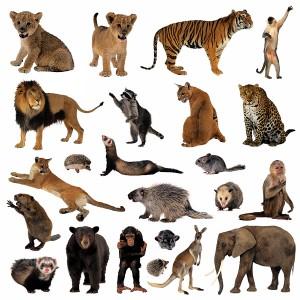 عکس انواع حیوانات،آبزیان و کفش دوزک