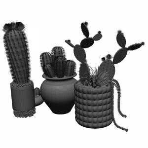 مدل سه بعدی انواع کاکتوس