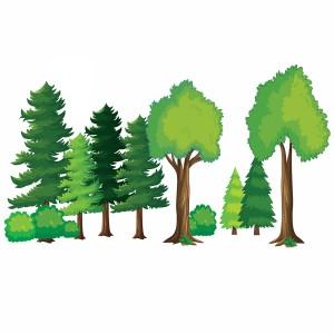 لایه باز درختان جنگل