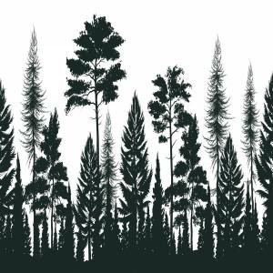 لایه باز مجموعه درختان