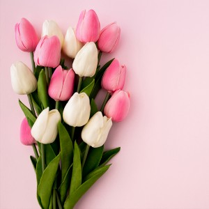 عکس گل های لاله با زمینه صورتی
