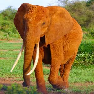 عکس فیل در جنگل با کیفیت بالا