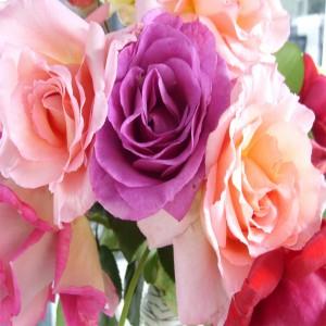 عکس گل های رز در زنگ های متفاوت