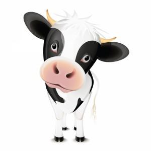 لایه باز گوساله بچه گاو