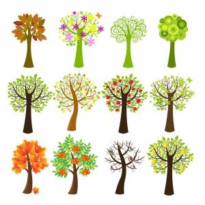 لایه باز درخت در فصل های متفاوت